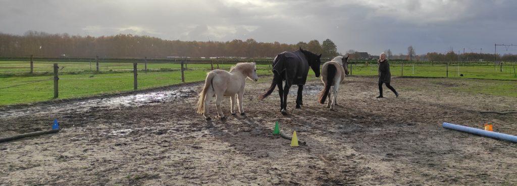 coachen met paarden- coaching-academie